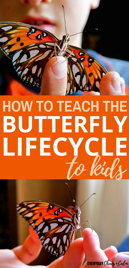 Butterfly Life Cycle: Don't use boring worksheets to teach kids about the life cycle of a butterfly. Help kids learn about metamorphosis using real butterflies!