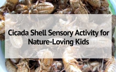 Cicada Shell Sensory Activity for Nature-Loving Kids