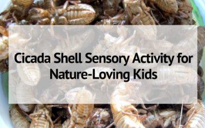 Cicada Shell Sensory Activity for Nature-Loving Kids