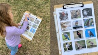 Backyard Bird Scavenger Hunt