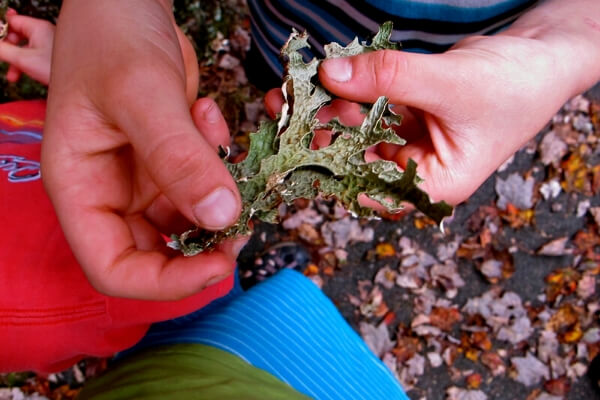 exploring lichen on a nature scavenger hunt