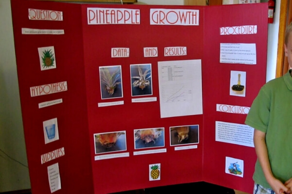 science fair project board on sprouting pineapple tops