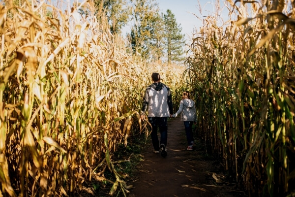 father and son in a corn maze